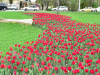 пл.Авиаторов (весна)