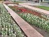 пл.Героев (весна)