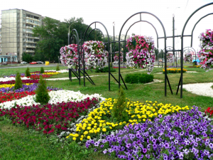 Городские цветники сезон 2011г